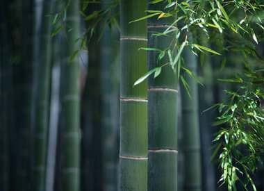 Moso bamboe vloeren