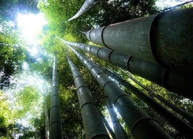 Bamboe vloer stylen en mogelijkheden
