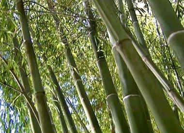 Onze vloeren van bamboe