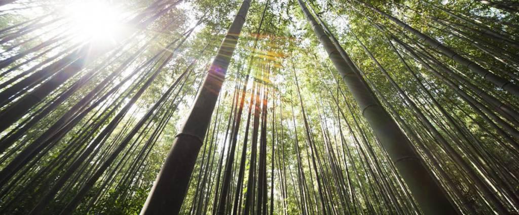 Daarom is een bamboe vloer zo duurzaam