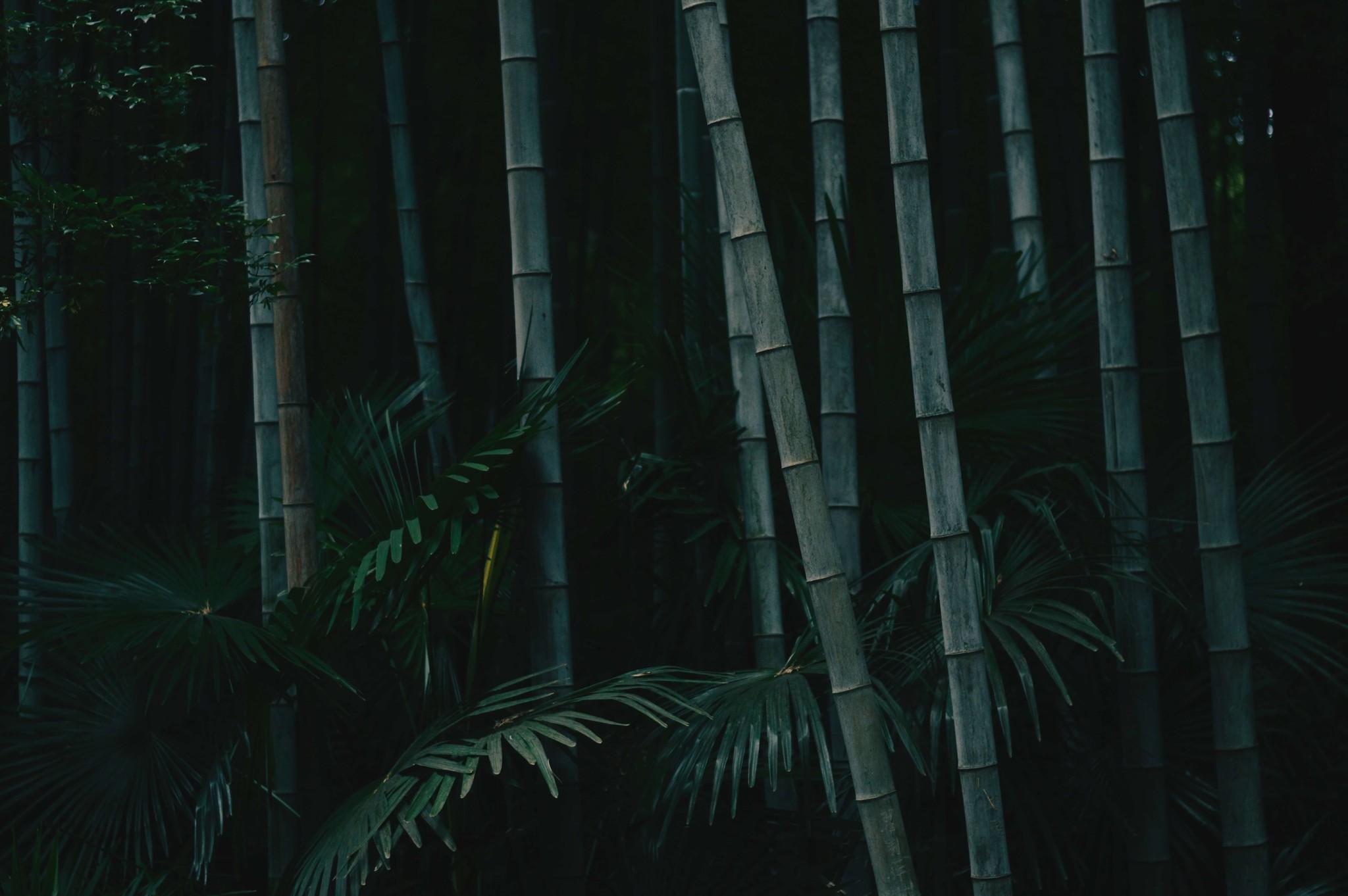Bamboe; een van de meest veelzijdige materialen ter wereld