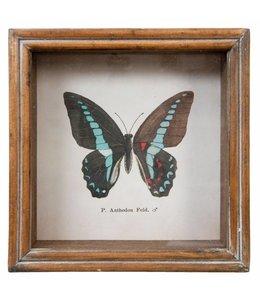 """Clayre & Eef Wandbild Landhaus """"Schmetterling"""" 18x18"""