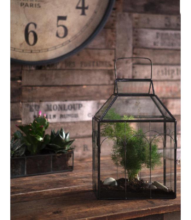 Glashaus für Zimmerpflanzen