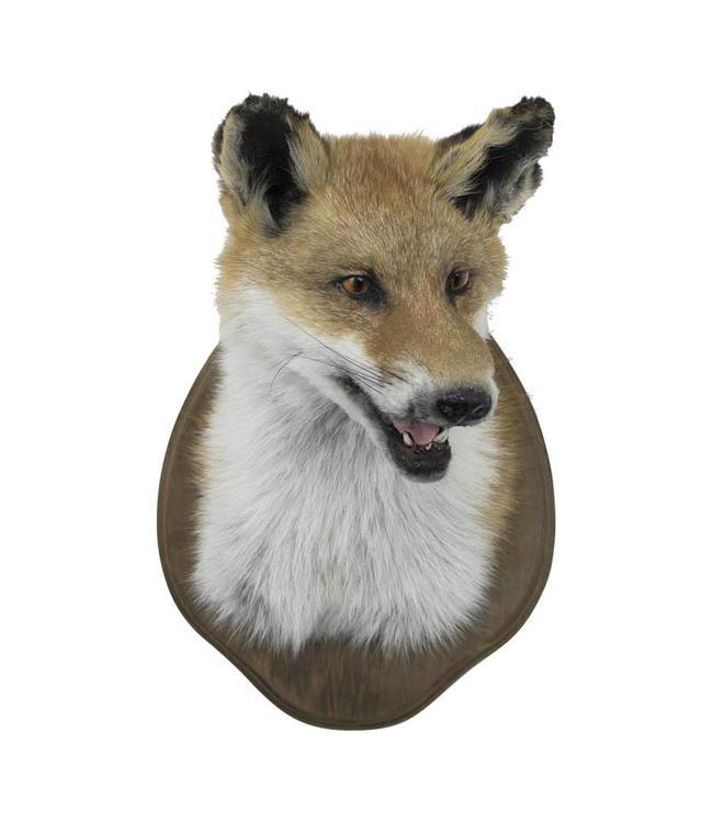 Fuchs Trophäe