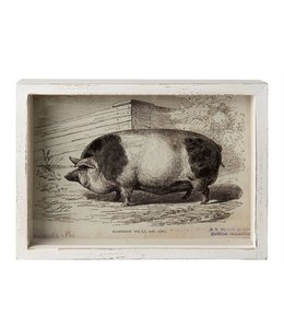 """Bilder Vintage Wandbild """"Schwein"""" Vintage 28x22"""