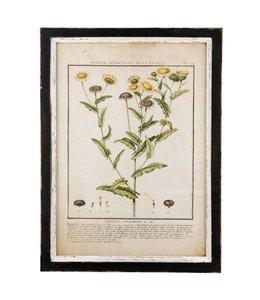 """Bilder Vintage Wandbild """"Heilpflanze"""""""