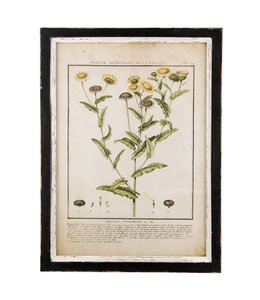 "Wandbild Vintage ""Heilpflanze"" 37x50"