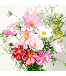 Jora Dahl Wild Bouquets Cosmos Collection