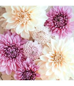 Jora Dahl Dahlienkollektion Soft Lavender