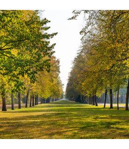 Gärten & Parke in Dresden - Fotoband - Limitierte Auflage