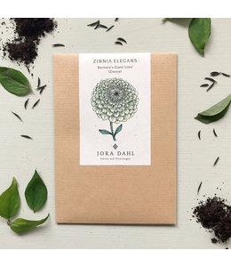 """Jora Dahl Zinniensamen Zinnia elegans """"Bernary`s Giant Lime"""" (Zinnie)"""