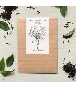 "Jora Dahl Panicum virgatum ""Fontaine"" (Rutenhirse)"