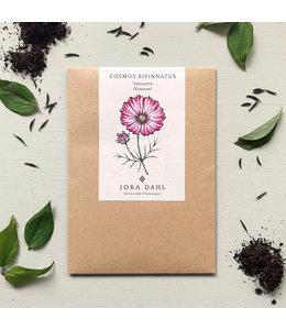 """Jora Dahl Cosmos bipinnatus """"Velouette"""" (Kosmee)"""