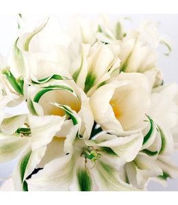 JORA DAHL Tulpenkollektion White Garden