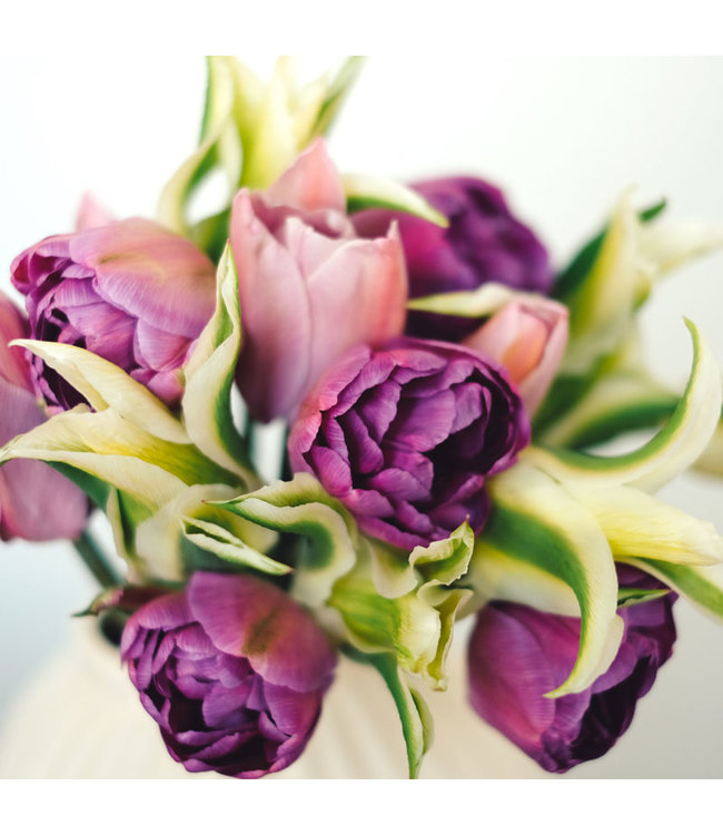 JORA DAHL Tulpenkollektion Lilacs & Lilies