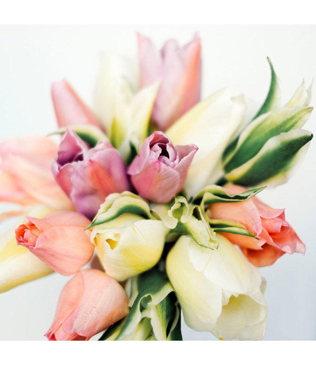 Jora Dahl Tulpenkollektion Springtime Mix