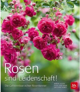 Rosen sind Leidenschaft
