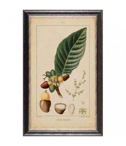 """Wandbild """"Vintage Botanic"""" 35x60"""