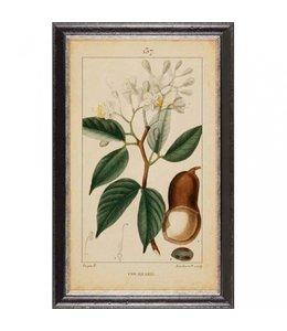"""Wandbild Vintage """"Botanic"""" 35x60"""