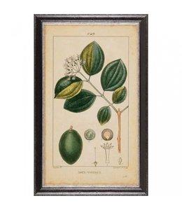 """Wandbild """"Botanic"""" 35x60 Vintage"""