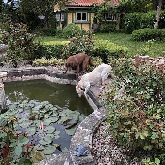 Villa Jähn Landhausgarten Labrador am Brunnen