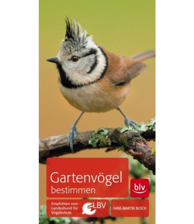 Gartenvögel bestimmen
