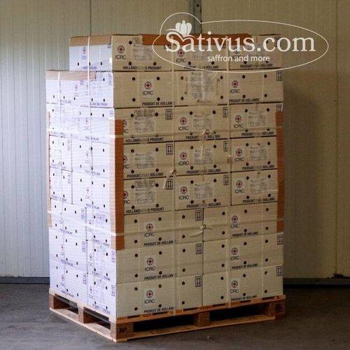 Crocus Sativus calibro 9/10, ordini superiori ai 1000 bulbi