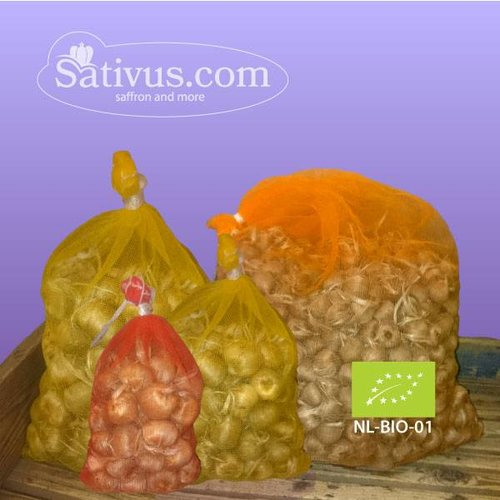 Crocus sativus 1000 bulbes calibre 9/10 - BIO
