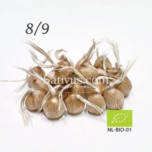 Crocus sativus 10 bulbes calibre 8/9 - BIO