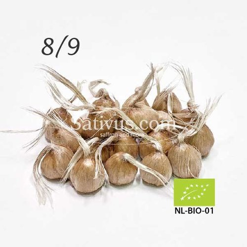 Crocus Sativus 2500 corms size 8/9 - BIO