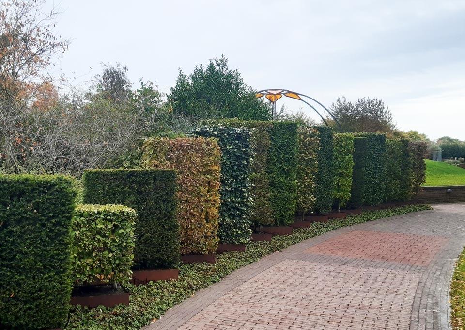 Taxushaag, de perfecte haag voor uw tuin!