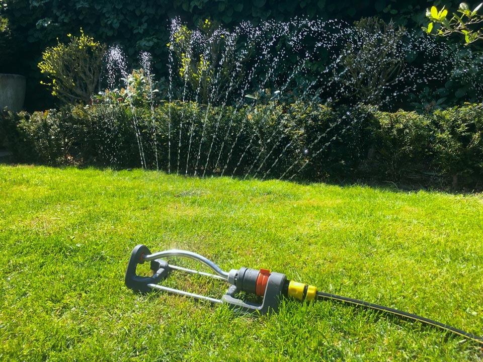 Taxus water geven, hoe en wanneer?