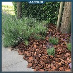 De voordelen van boomschors in uw tuin