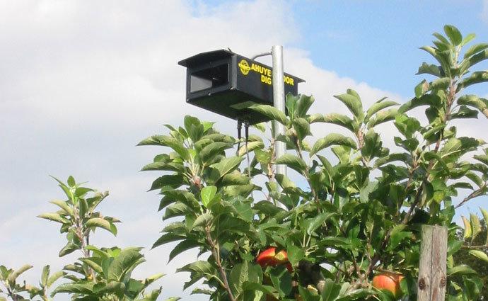 Vogelwering in fruitteelt