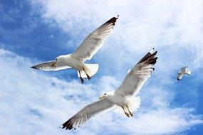 Meeuwenoverlast te lijf met vogelafweer van Alcetsound