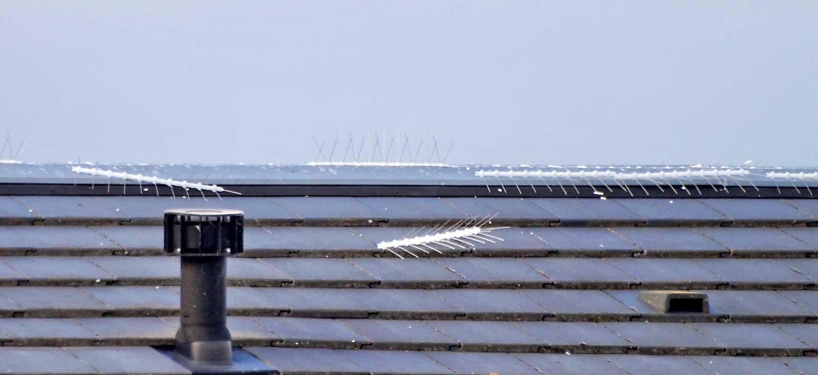 Voorbeeld van verkeerd gemonteerde duivenpinnen