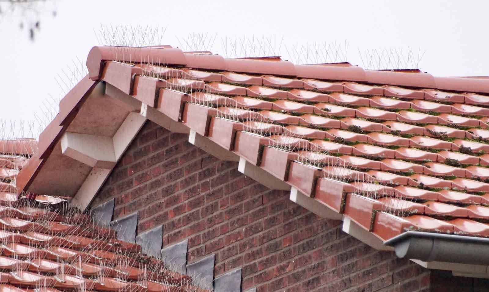 Duiven verjagen en duivenoverlast voorkomen op het dak van uw huis