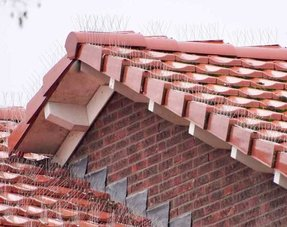 Pigeon spikes on ridge and facade tiles