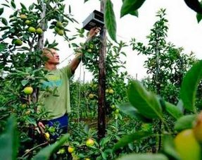 Bird control in orchards and fruit growing sector