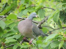 Alcetsound helpt telers overlast van vogels te voorkomen