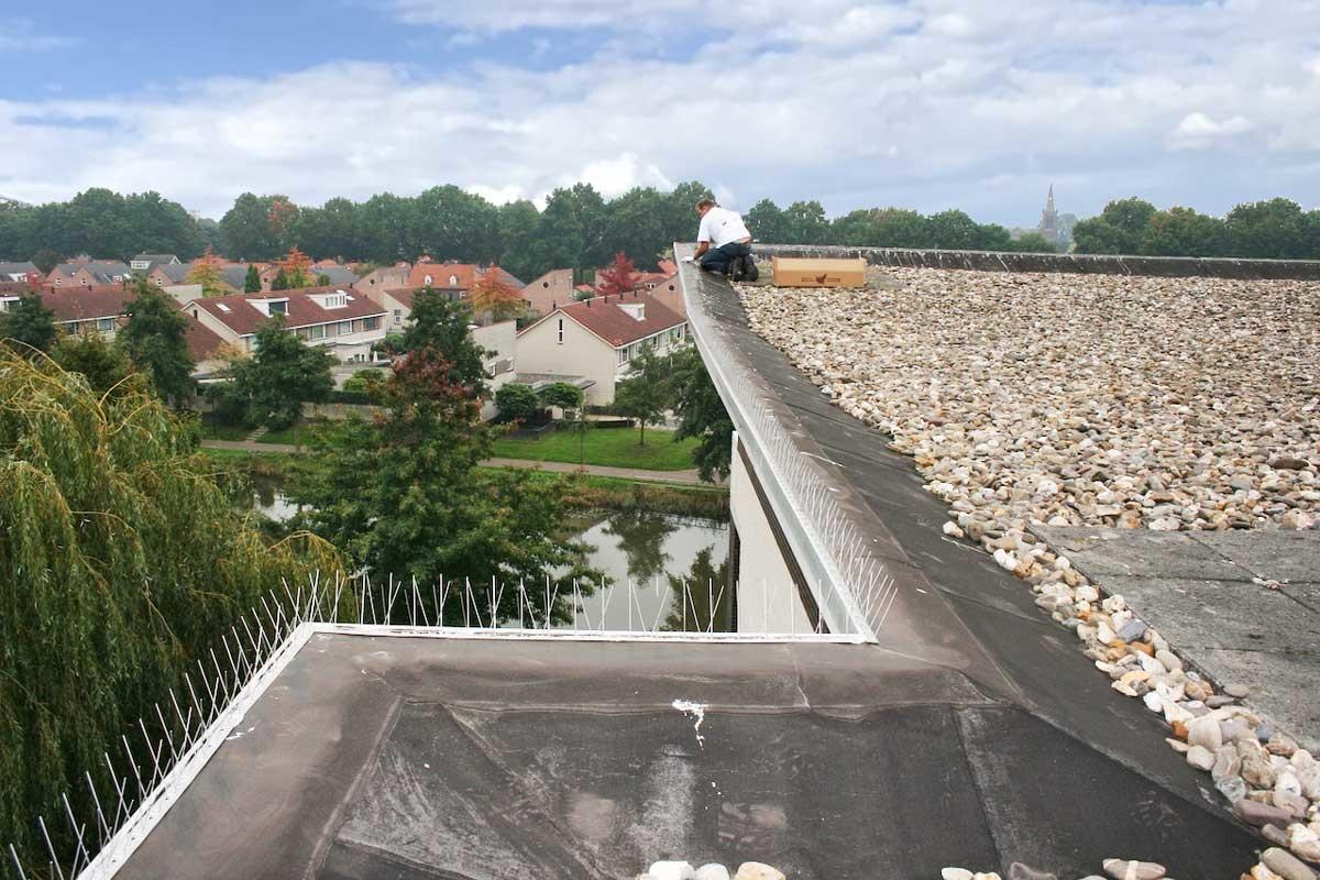 Duivenpinnen op de dakrand