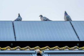 Zonnepanelen beschermen tegen vogels