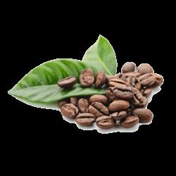 CAFFEINE HAARVERLIES