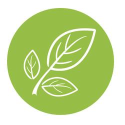 GREEN TEA NORMAAL HAAR