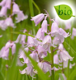 Hyacint (bos/wilde)  Hyacinthoides non-scripta Roze, BIO