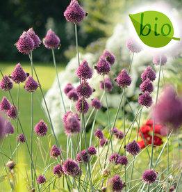 Trommelstokjes  Allium sphaerocephalon, BIO