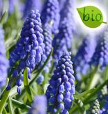 Mix Biologisch mengsel donkerblauw & crèmegeel