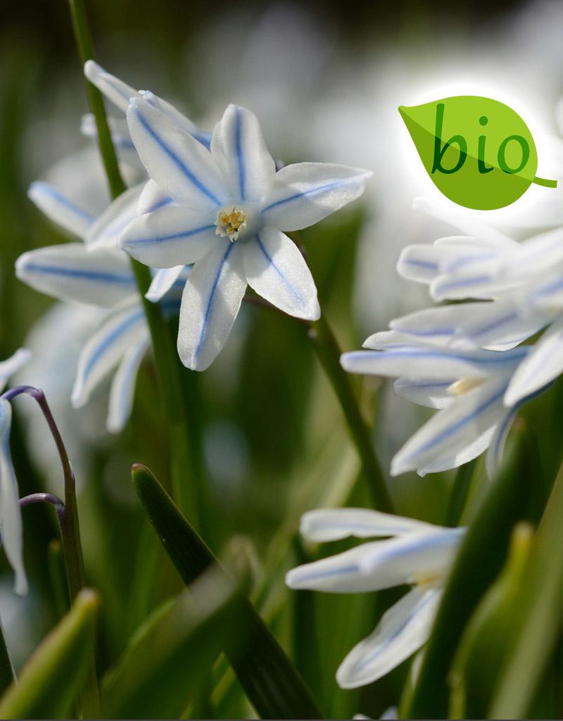 Mix Biologisch mengsel  knalgeel & gestreept blauw