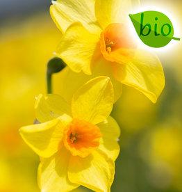 Narcis  Narcissus 'Martinette', BIO