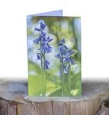 Wenskaart  Wenskaart Spaanse Hyacint